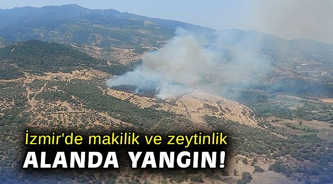 İzmir'de makilik ve zeytinlik alanda yangın!