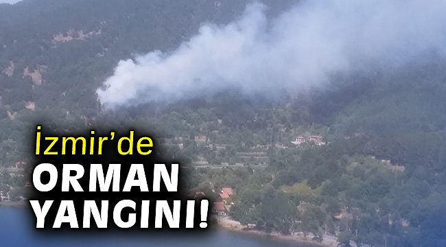 İzmir'de orman yangını çıktı!