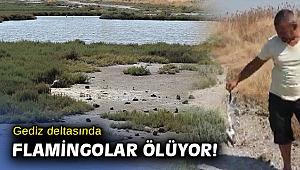İzmir'in de flamingoları ölüyor... Yetkililer endişeli...