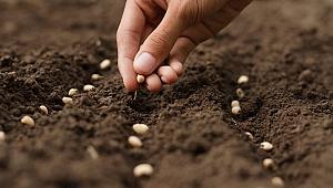 Küresel iklim değişikliği gıdaya erişimi zorlaştırıyor