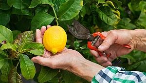 Akdeniz Meyve Sineği ile bölgesel mücadele çağrısı