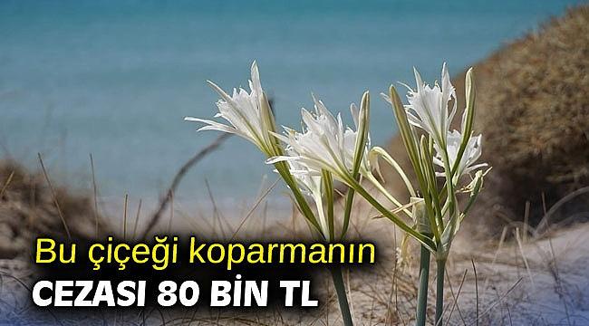 Bu çiçeği koparmanın cezası 80 bin TL