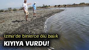 İzmir'de binlerce ölü balık kıyıya vurdu!