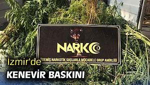 İzmir'de kenevir baskını