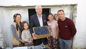 Kavacık'ta Üzüm Festivali zamanı