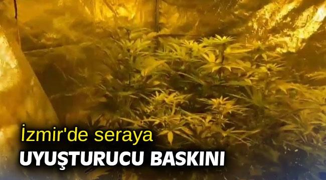 İzmir'de seraya uyuşturucu baskını