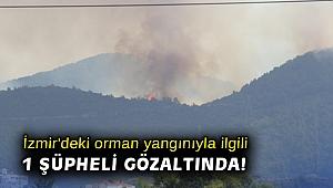 İzmir'deki orman yangınıyla ilgili 1 şüpheli gözaltında