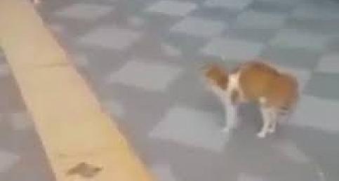 Önüne Gelene Saldıran Adanalı Kedi
