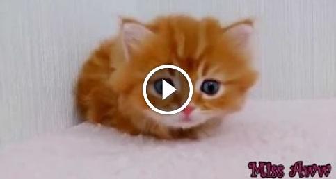 En Sevimli Kedi Videoları